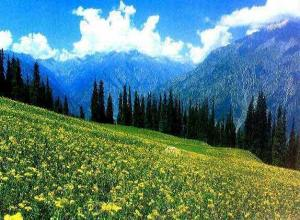 Amazing Kashmir Package