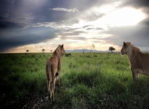 07 DAYS TANZANIA SAFARI PACKAGE