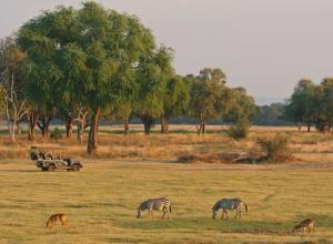 South Luangwa & Mana Pools Safari